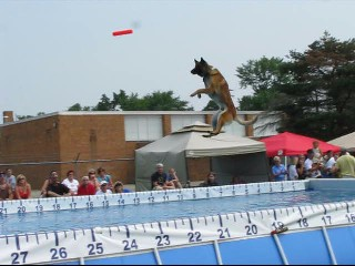 The Ultimate Air Dog Competition