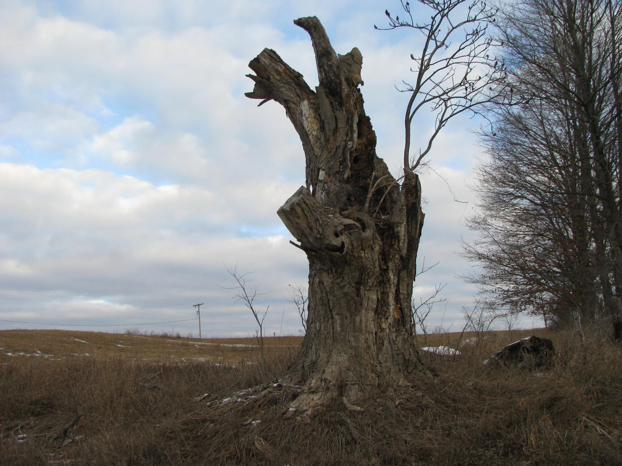 The remains of a once grand tree stands against the backdrop of a morning sky in Michigan.